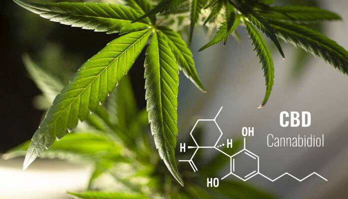 History of Cannabis Plant